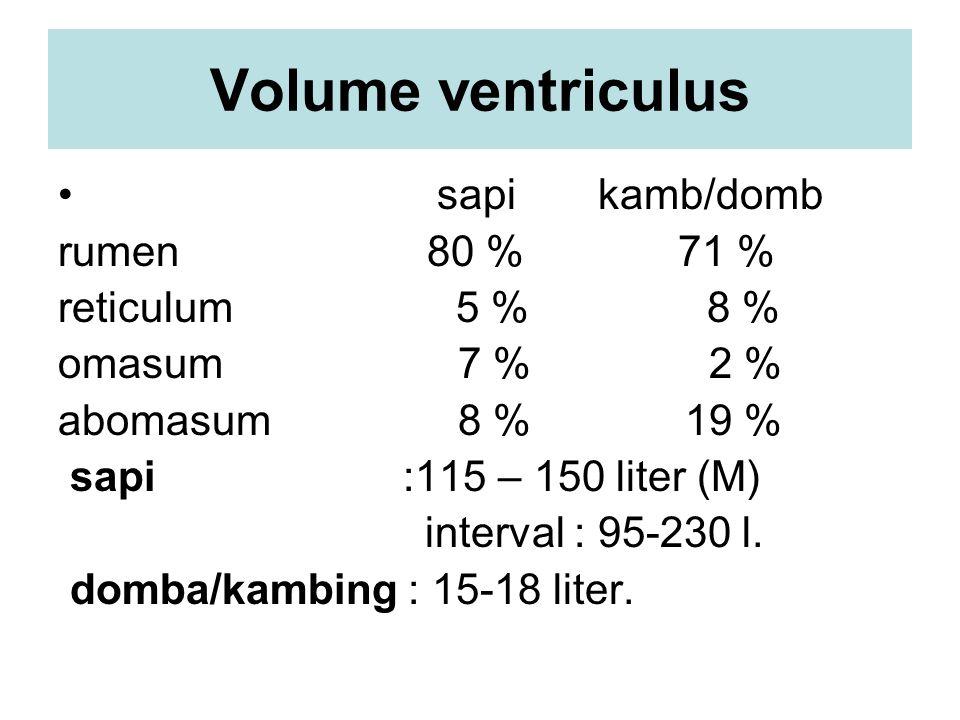 Volume ventriculus sapi kamb/domb rumen 80 % 71 % reticulum 5 % 8 %