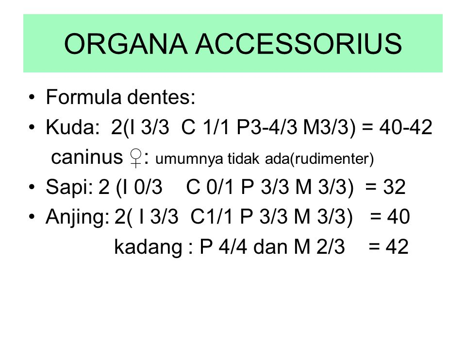 ORGANA ACCESSORIUS Formula dentes: