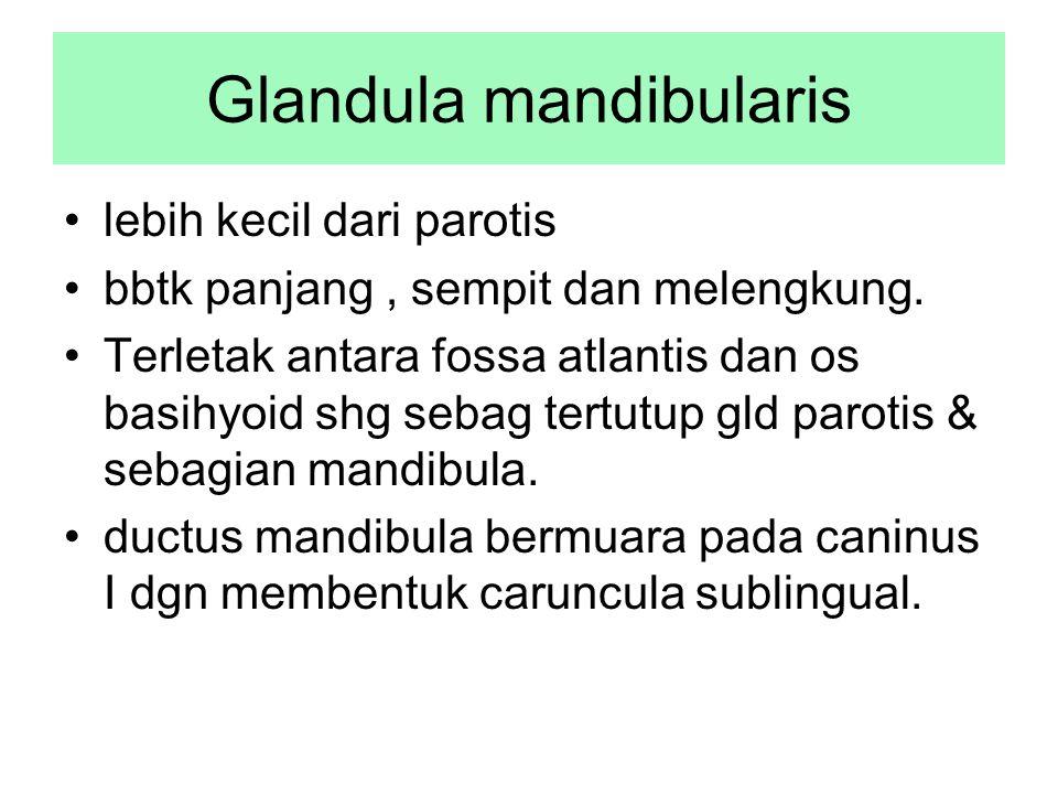 Glandula mandibularis