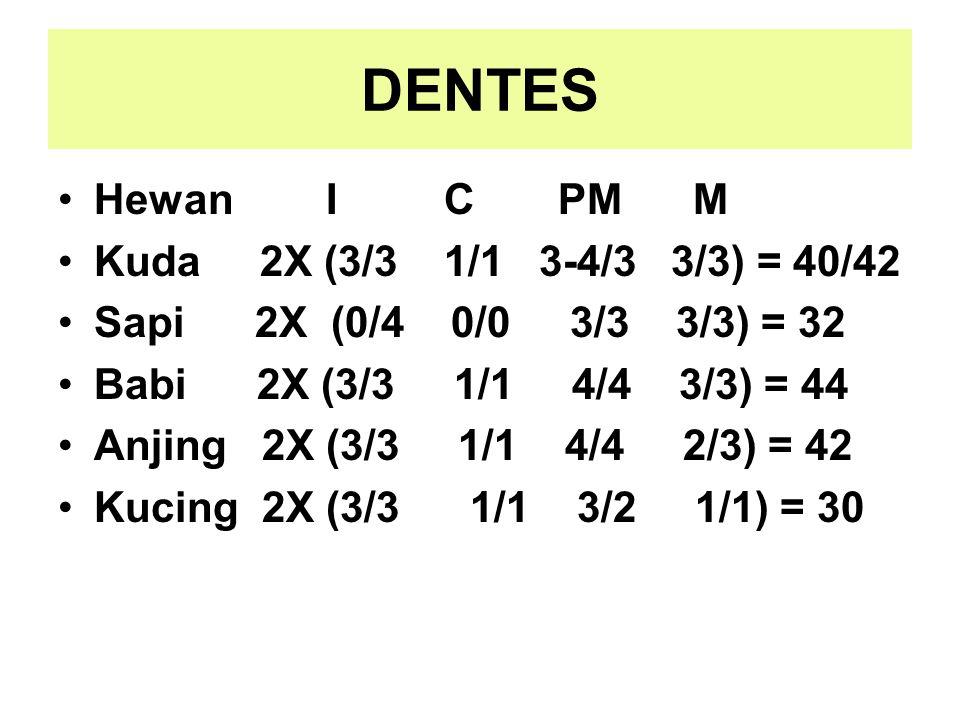 DENTES Hewan I C PM M Kuda 2X (3/3 1/1 3-4/3 3/3) = 40/42