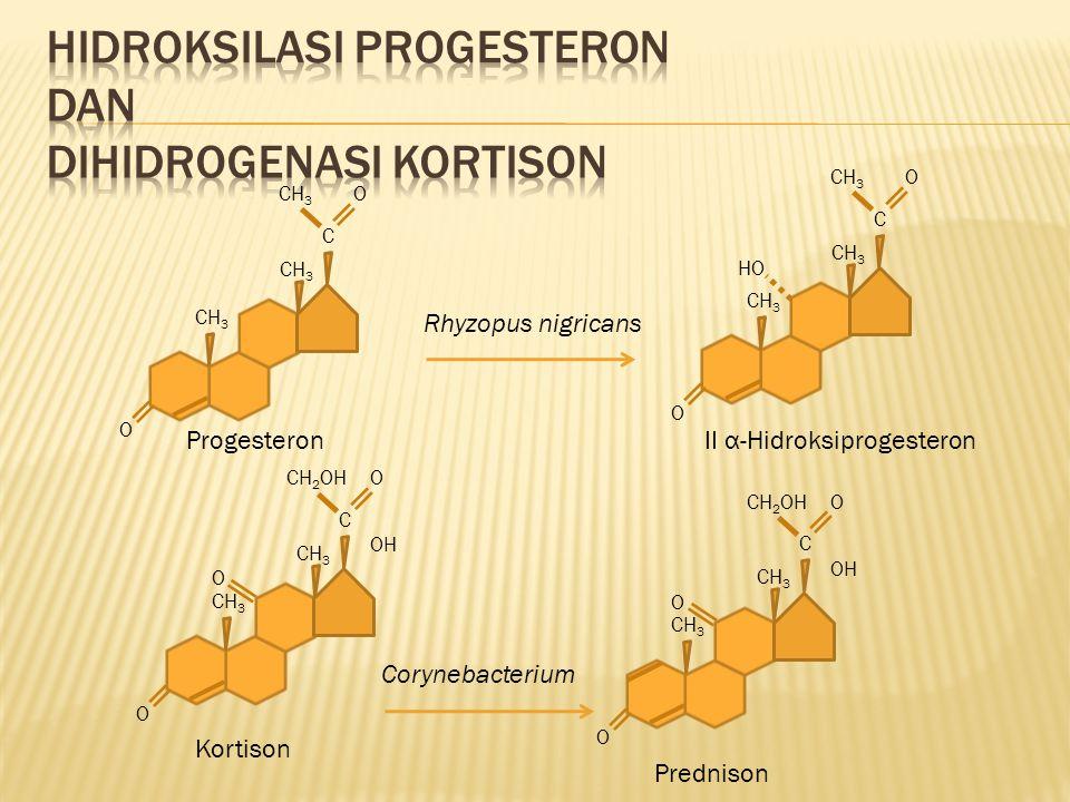 Hidroksilasi progesteron dan dihidrogenasi kortison