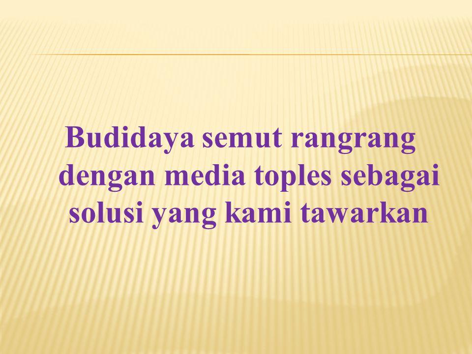 Budidaya semut rangrang dengan media toples sebagai solusi yang kami tawarkan