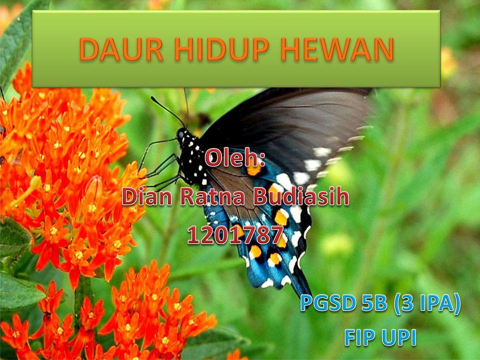 Oleh: Dian Ratna Budiasih 1201787