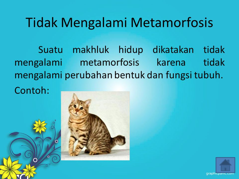 Tidak Mengalami Metamorfosis