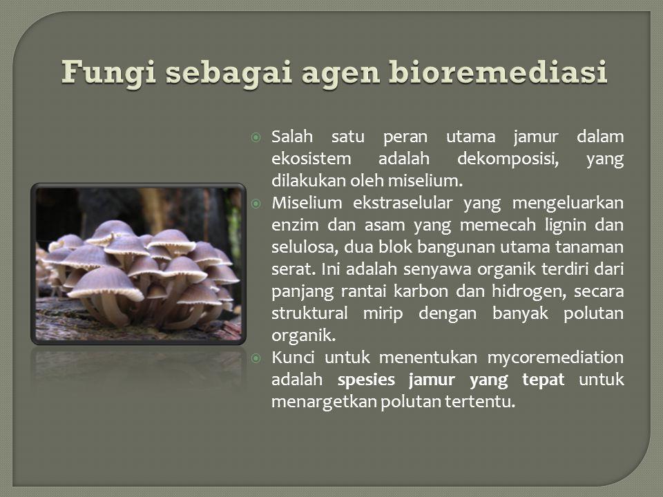 Fungi sebagai agen bioremediasi