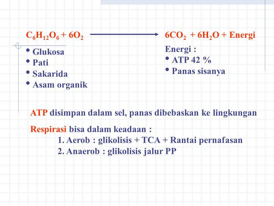 C6H12O6 + 6O2 6CO2 + 6H2O + Energi. Energi : ATP 42 % Panas sisanya. Glukosa. Pati. Sakarida.