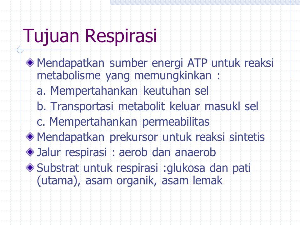 Tujuan Respirasi Mendapatkan sumber energi ATP untuk reaksi metabolisme yang memungkinkan : a. Mempertahankan keutuhan sel.