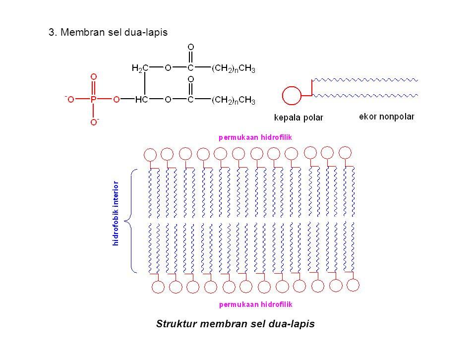 3. Membran sel dua-lapis Struktur membran sel dua-lapis