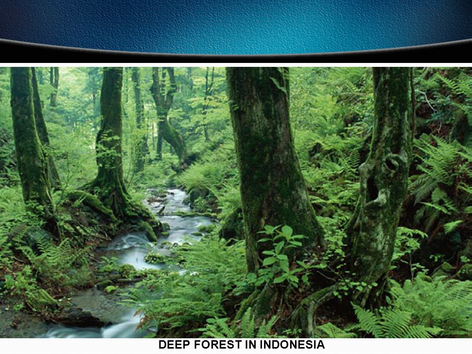 DEEP FOREST IN INDONESIA