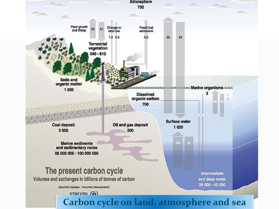 Carbon cycle on land, atmosphere and sea