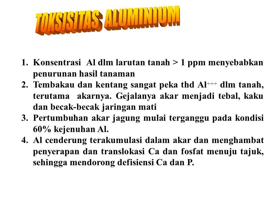 TOKSISITAS ALUMINIUM 1. Konsentrasi Al dlm larutan tanah > 1 ppm menyebabkan penurunan hasil tanaman.