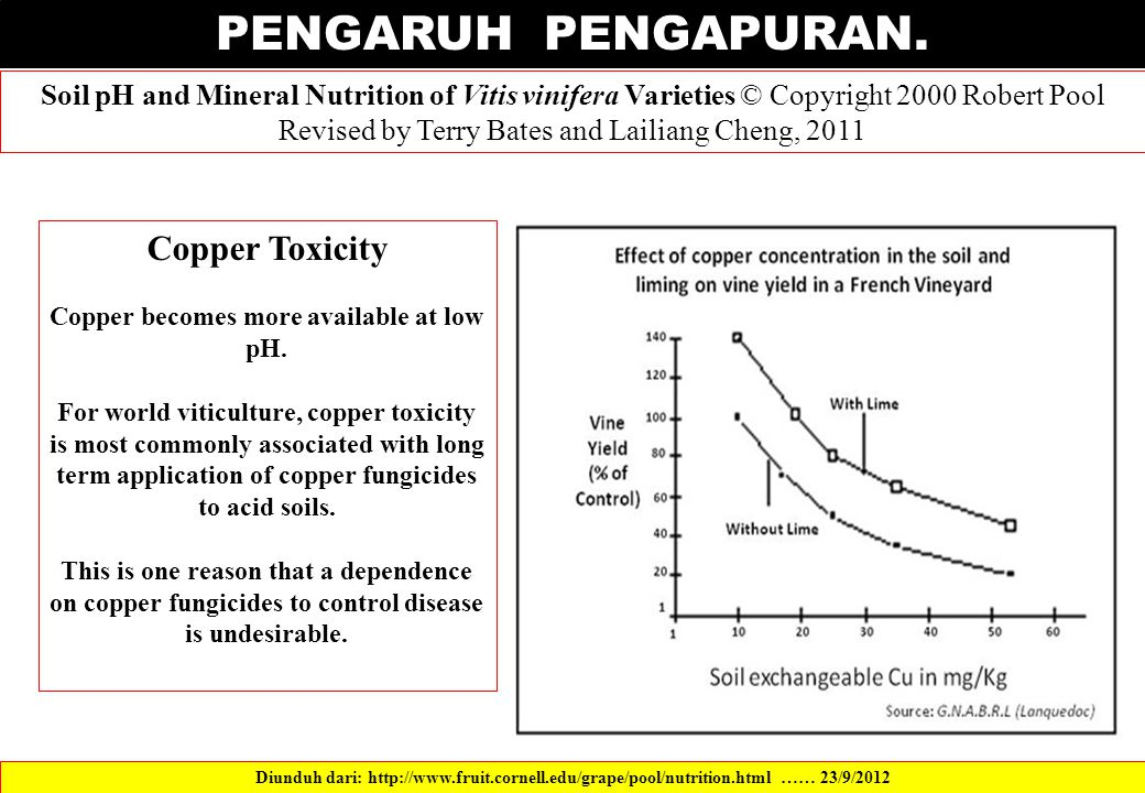 Copper becomes more available at low pH.