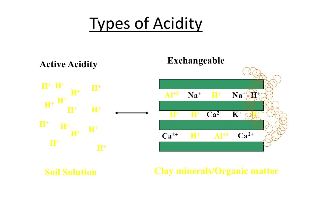 Types of Acidity Exchangeable Active Acidity
