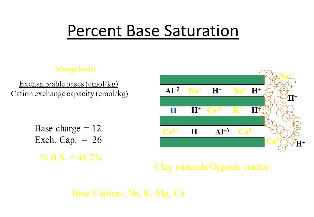 Percent Base Saturation