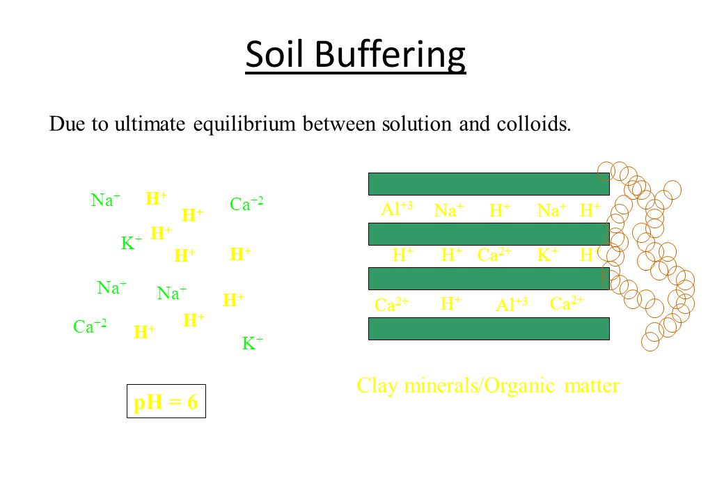 Soil Buffering Due to ultimate equilibrium between solution and colloids. Na+ H+ Ca+2. Al+3. Na+