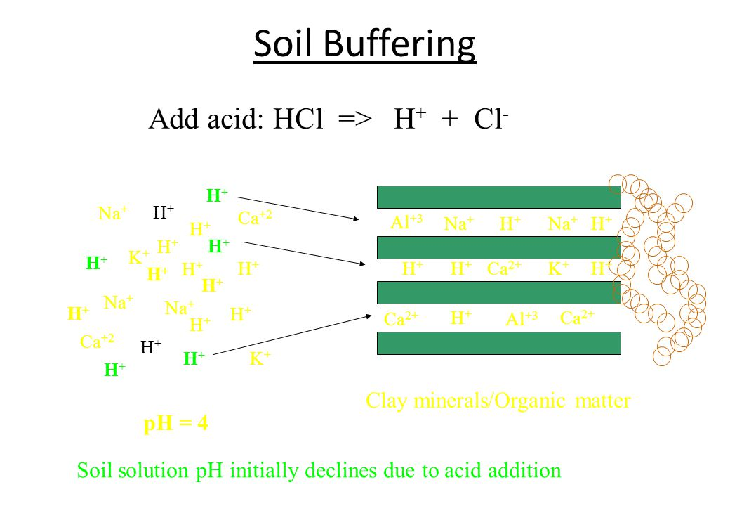 Soil Buffering Add acid: HCl => H+ + Cl-