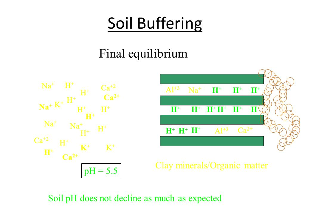 Soil Buffering Final equilibrium Clay minerals/Organic matter pH = 5.5