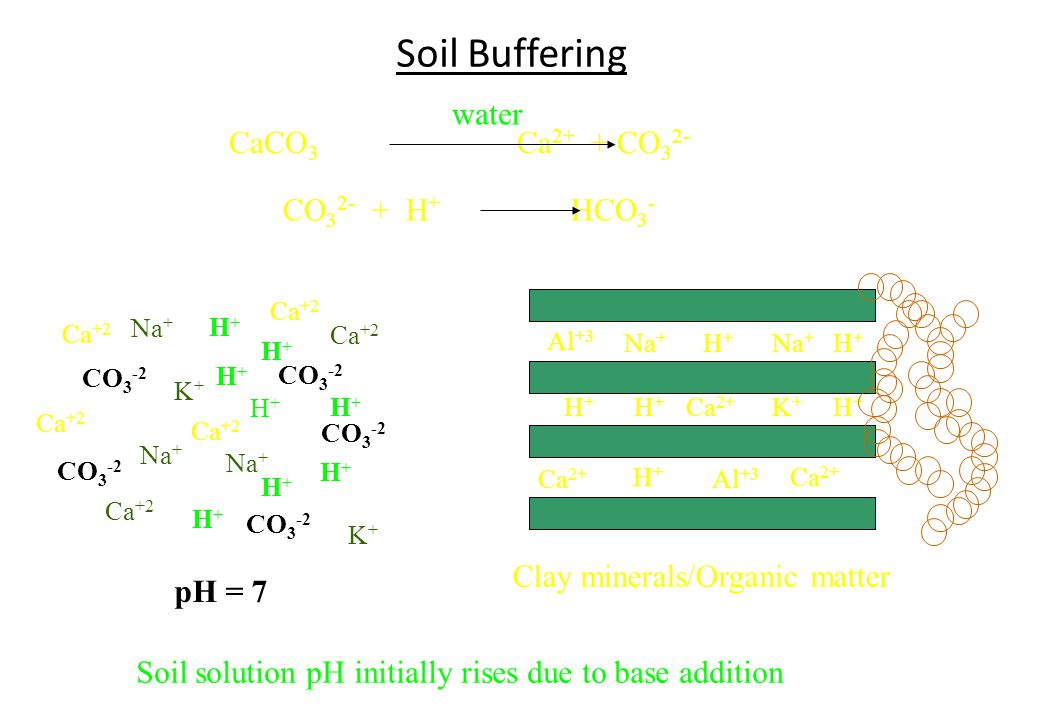 Soil Buffering water CaCO3 Ca2+ + CO32- CO32- + H+ HCO3-