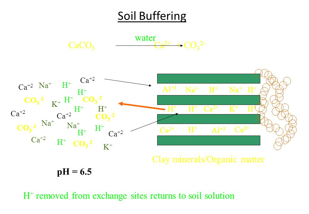 Soil Buffering water CaCO3 Ca2+ + CO32- Clay minerals/Organic matter
