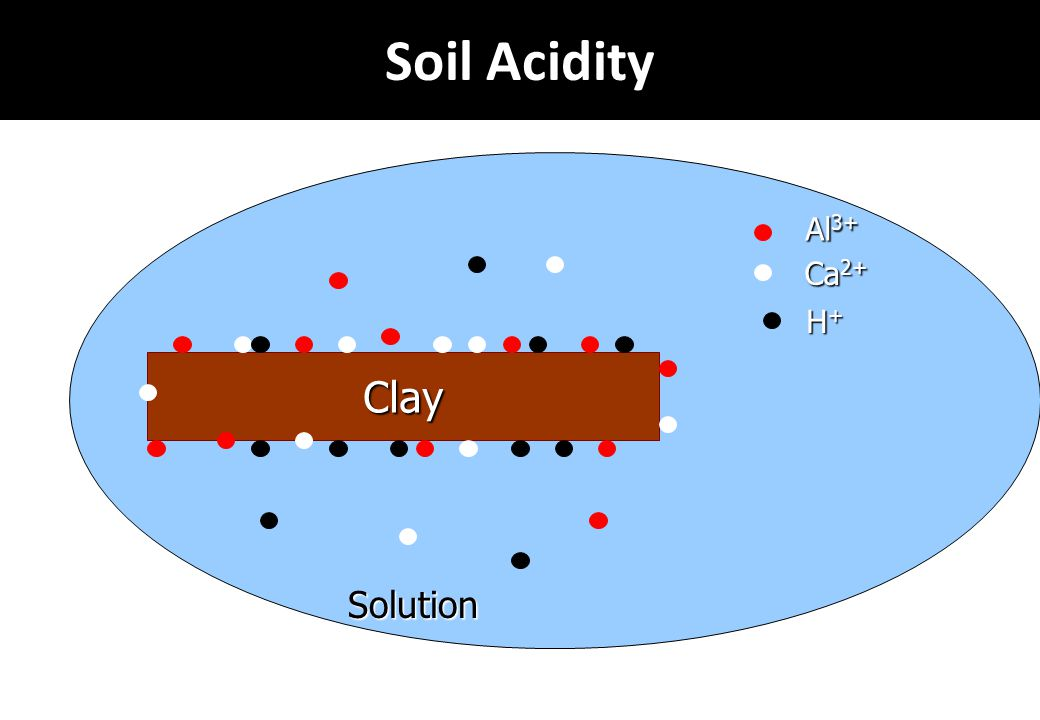 Soil Acidity Al3+ Ca2+ H+ Clay Solution