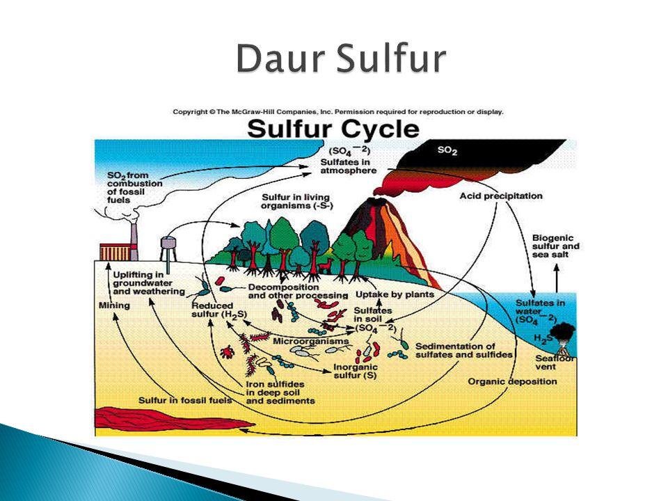 Daur Sulfur