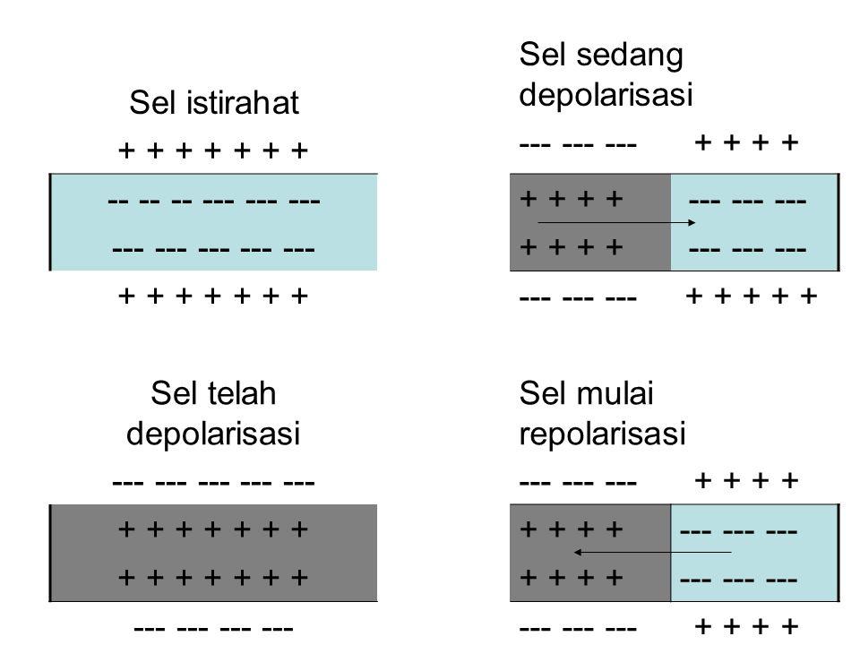Sel telah depolarisasi