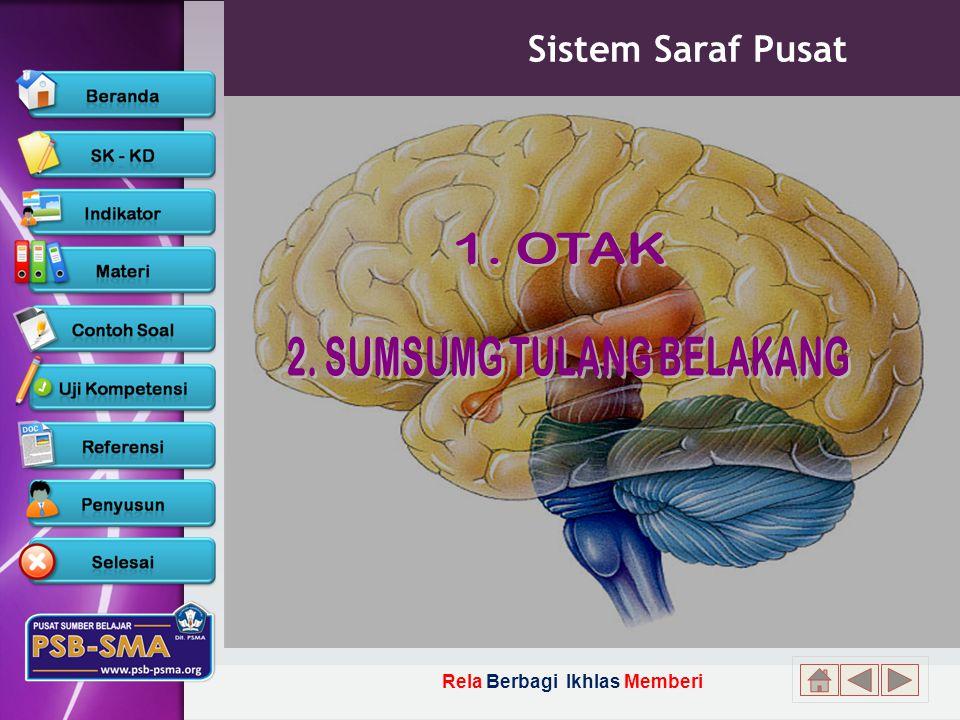 2. SUMSUMG TULANG BELAKANG