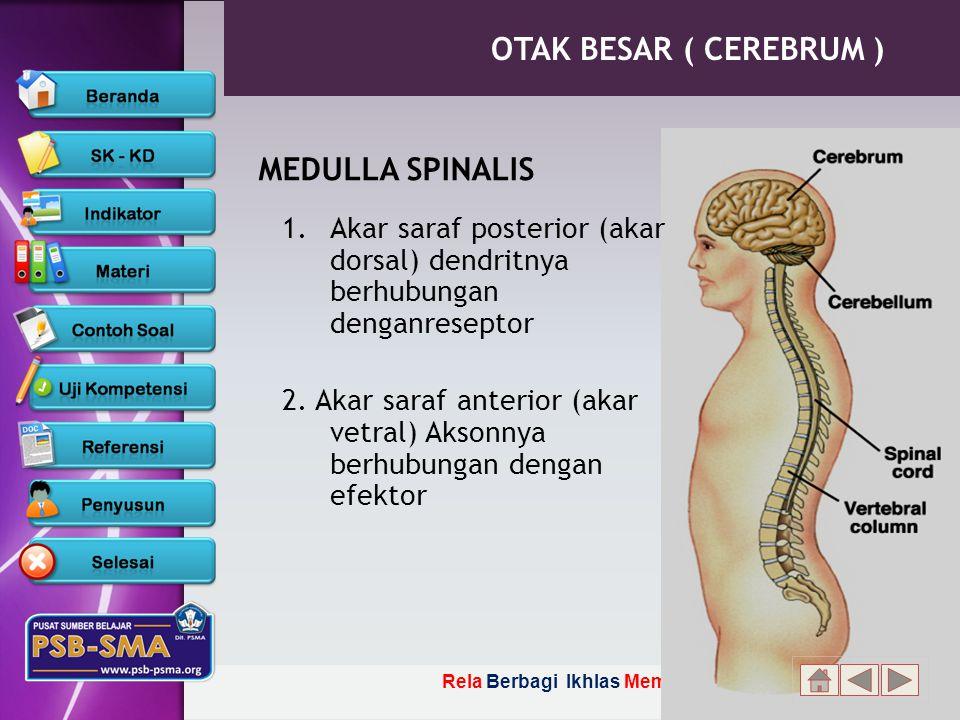 OTAK BESAR ( CEREBRUM ) MEDULLA SPINALIS