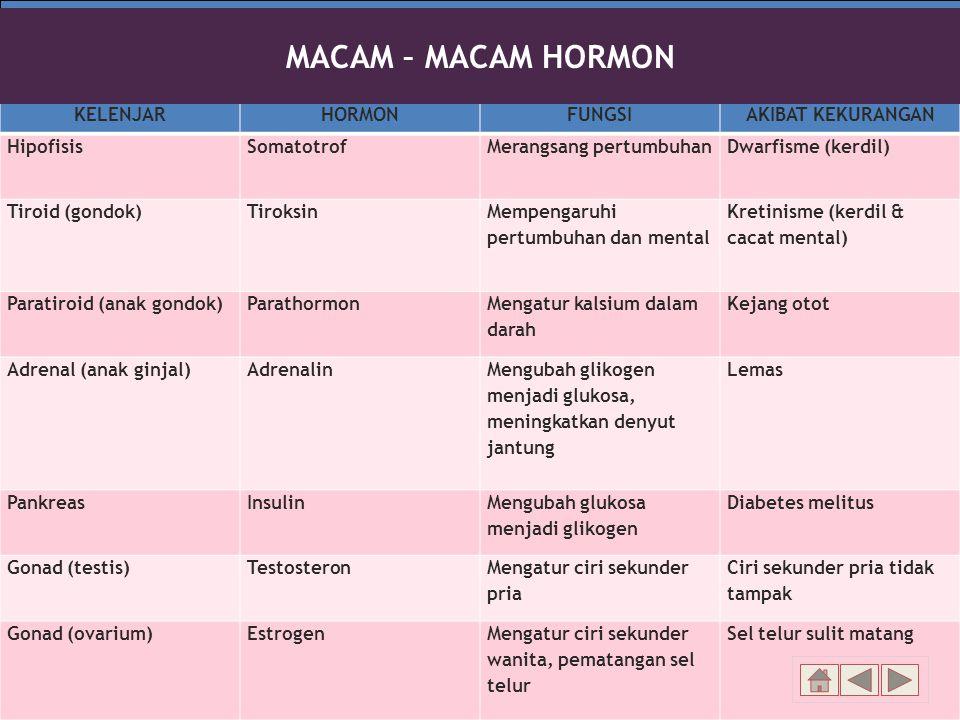 MACAM – MACAM HORMON KELENJAR HORMON FUNGSI AKIBAT KEKURANGAN