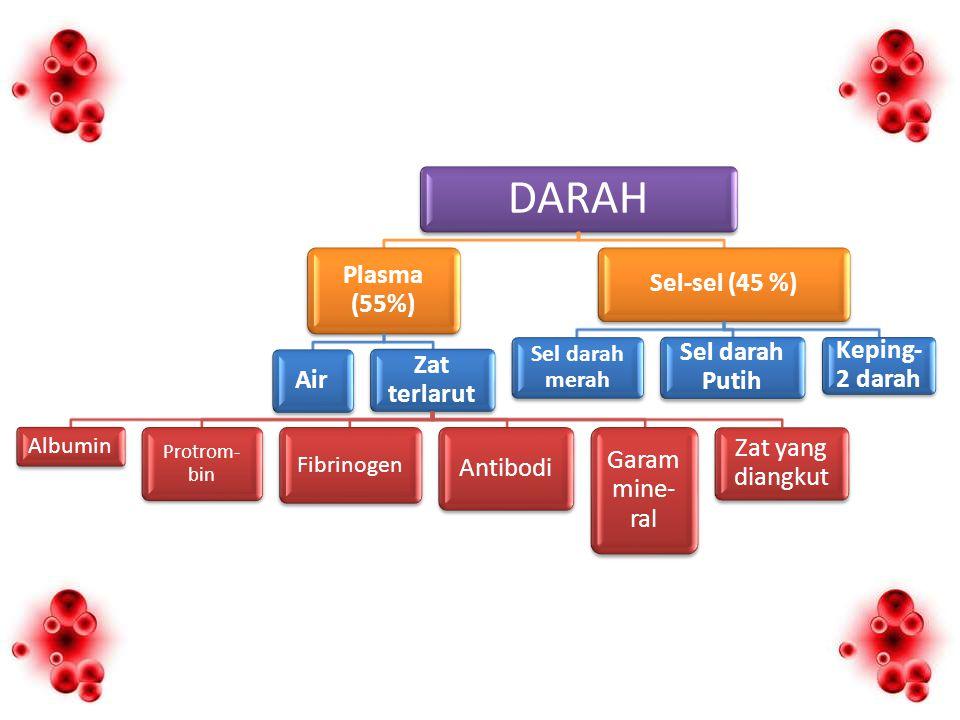 DARAH Plasma (55%) Air Zat terlarut Antibodi Garam mine-ral