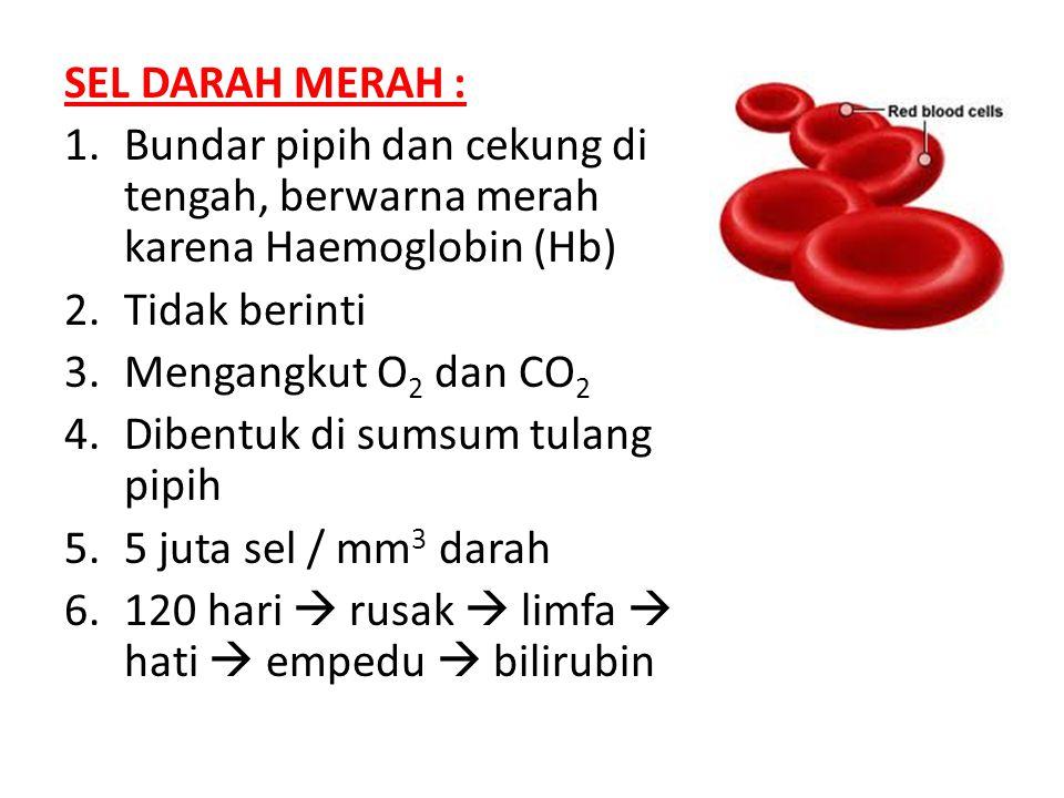 SEL DARAH MERAH : Bundar pipih dan cekung di tengah, berwarna merah karena Haemoglobin (Hb) Tidak berinti.