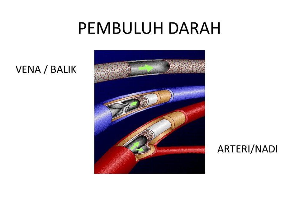 PEMBULUH DARAH VENA / BALIK ARTERI/NADI