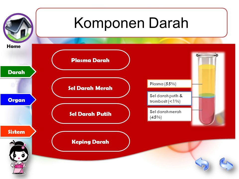 Komponen Darah Plasma Darah Darah Sel Darah Merah Organ