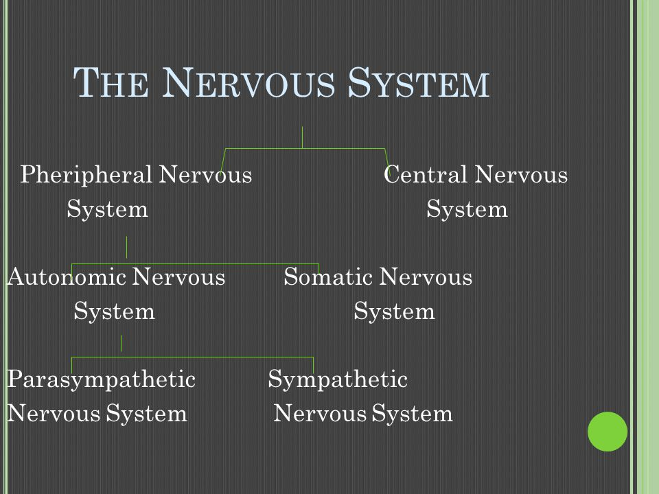 The Nervous System Pheripheral Nervous Central Nervous System System