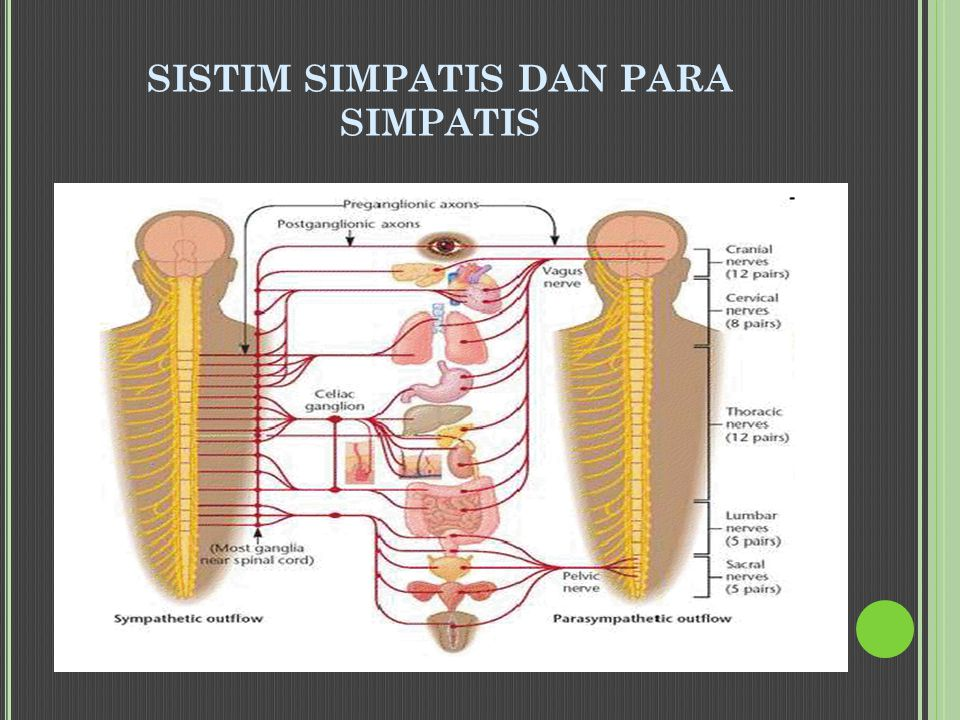 SISTIM SIMPATIS DAN PARA SIMPATIS