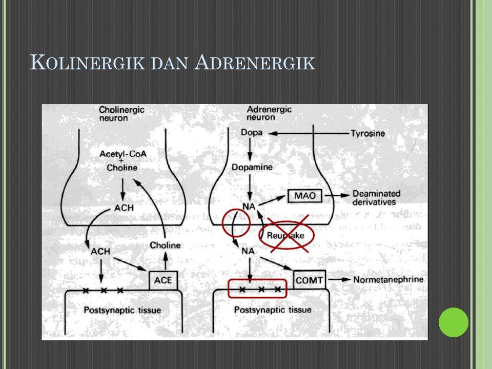 Kolinergik dan Adrenergik