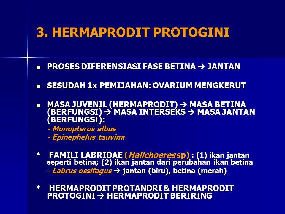 3. HERMAPRODIT PROTOGINI