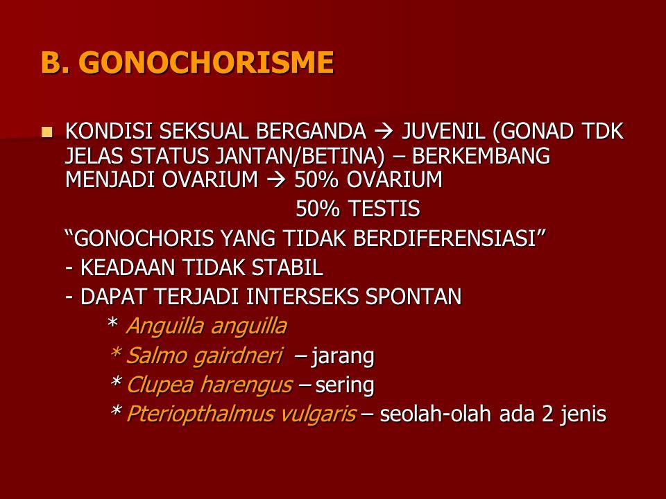 B. GONOCHORISME KONDISI SEKSUAL BERGANDA  JUVENIL (GONAD TDK JELAS STATUS JANTAN/BETINA) – BERKEMBANG MENJADI OVARIUM  50% OVARIUM.