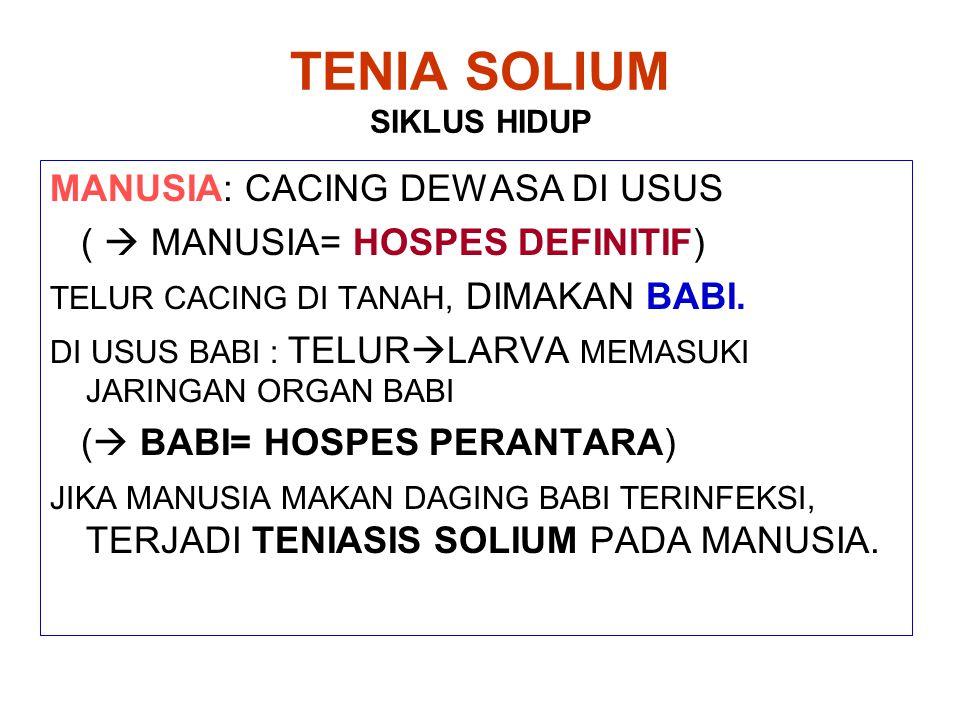 TENIA SOLIUM SIKLUS HIDUP