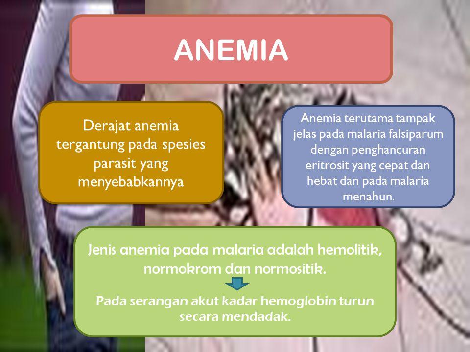 ANEMIA Derajat anemia tergantung pada spesies parasit yang menyebabkannya.