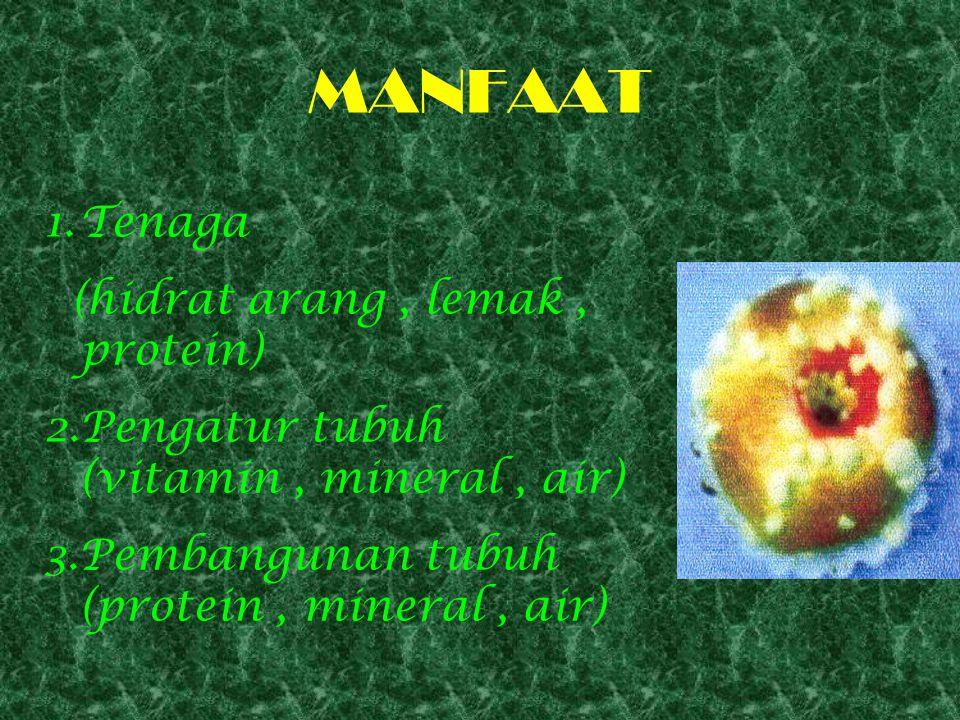 MANFAAT Tenaga (hidrat arang , lemak , protein)