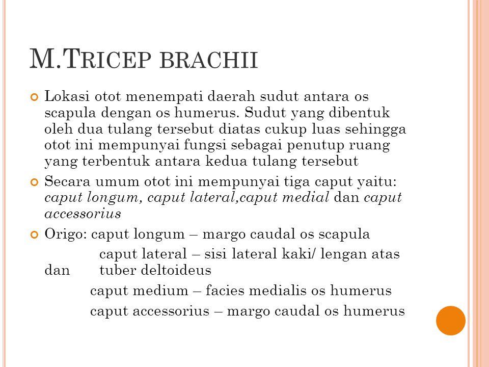 M.Tricep brachii