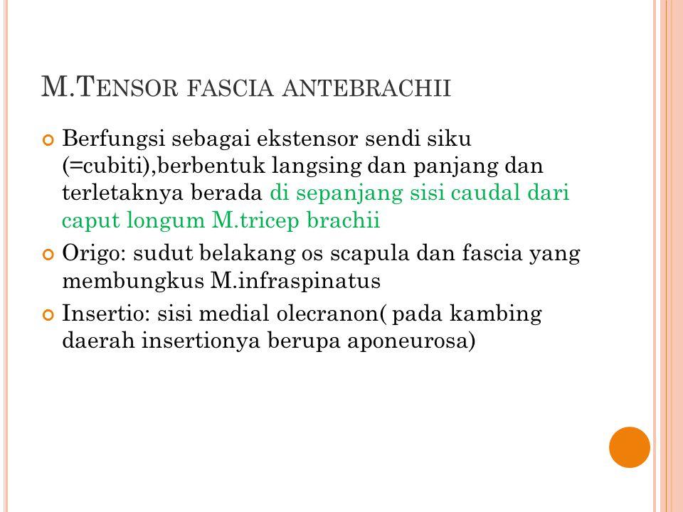M.Tensor fascia antebrachii
