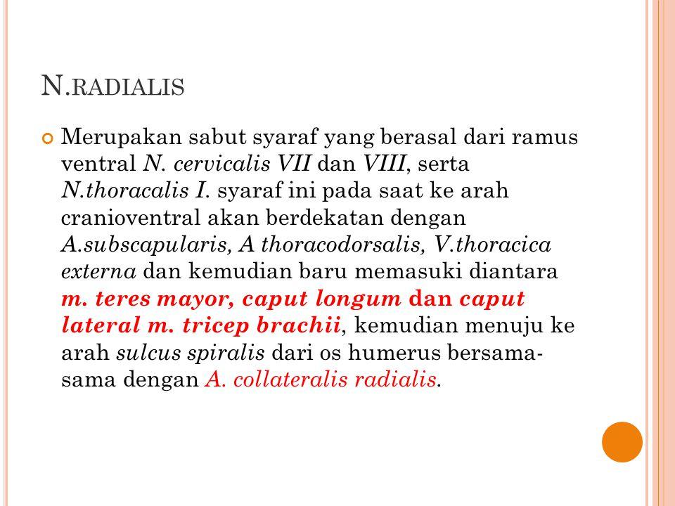 N.radialis