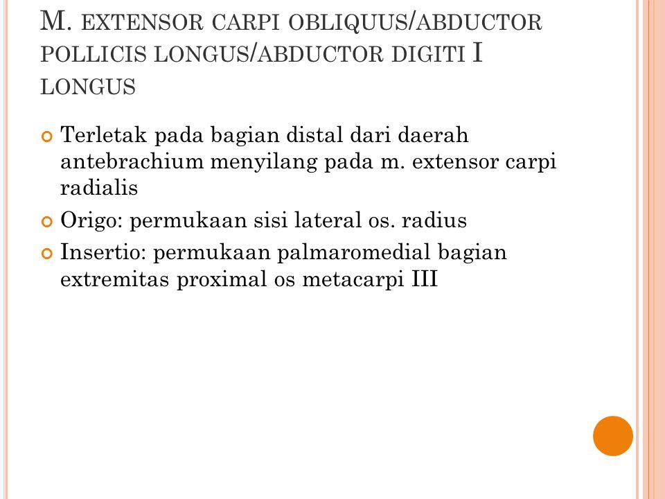 M. extensor carpi obliquus/abductor pollicis longus/abductor digiti I longus
