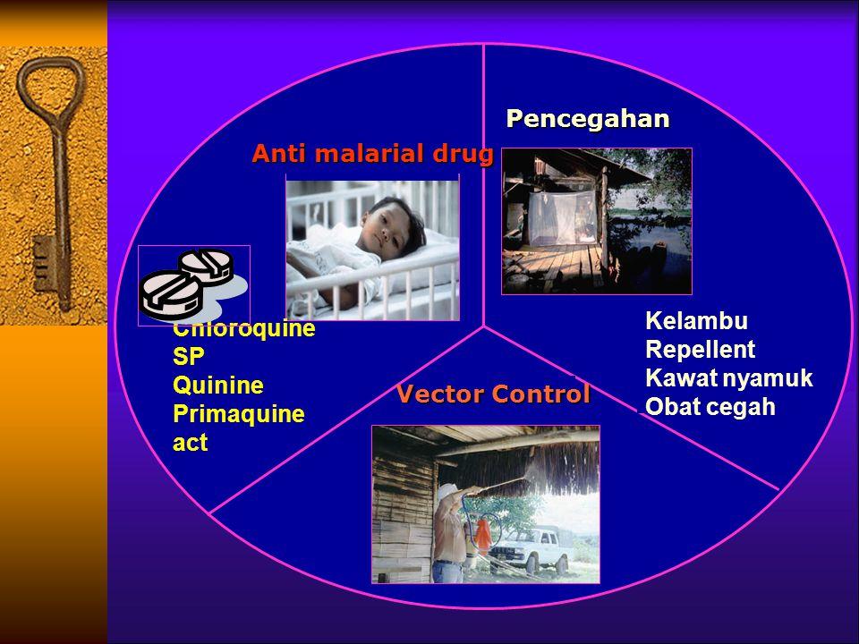 Anti malarial drug Chloroquine. SP. Quinine. Primaquine. act. Pencegahan. Vector Control. Kelambu.