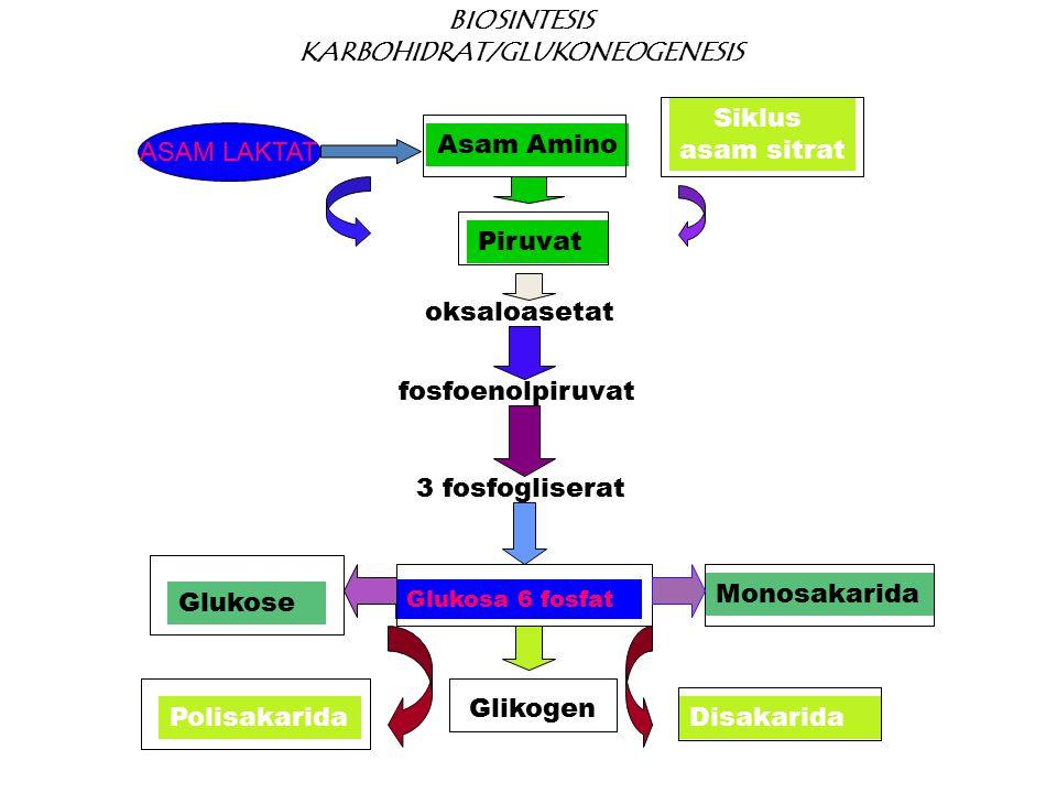 BIOSINTESIS KARBOHIDRAT/GLUKONEOGENESIS