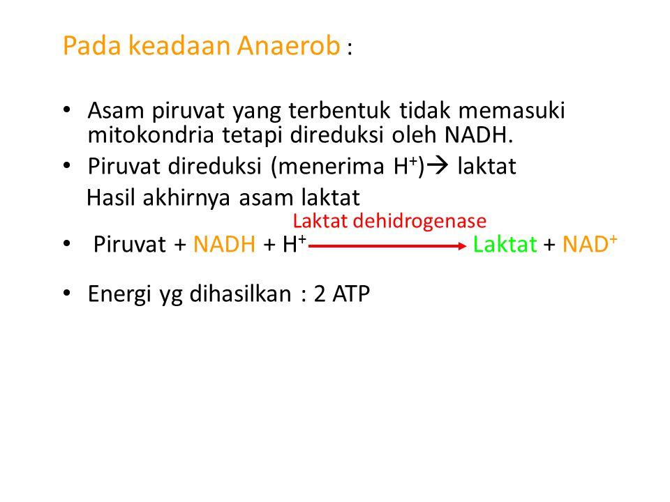 Pada keadaan Anaerob : Asam piruvat yang terbentuk tidak memasuki mitokondria tetapi direduksi oleh NADH.