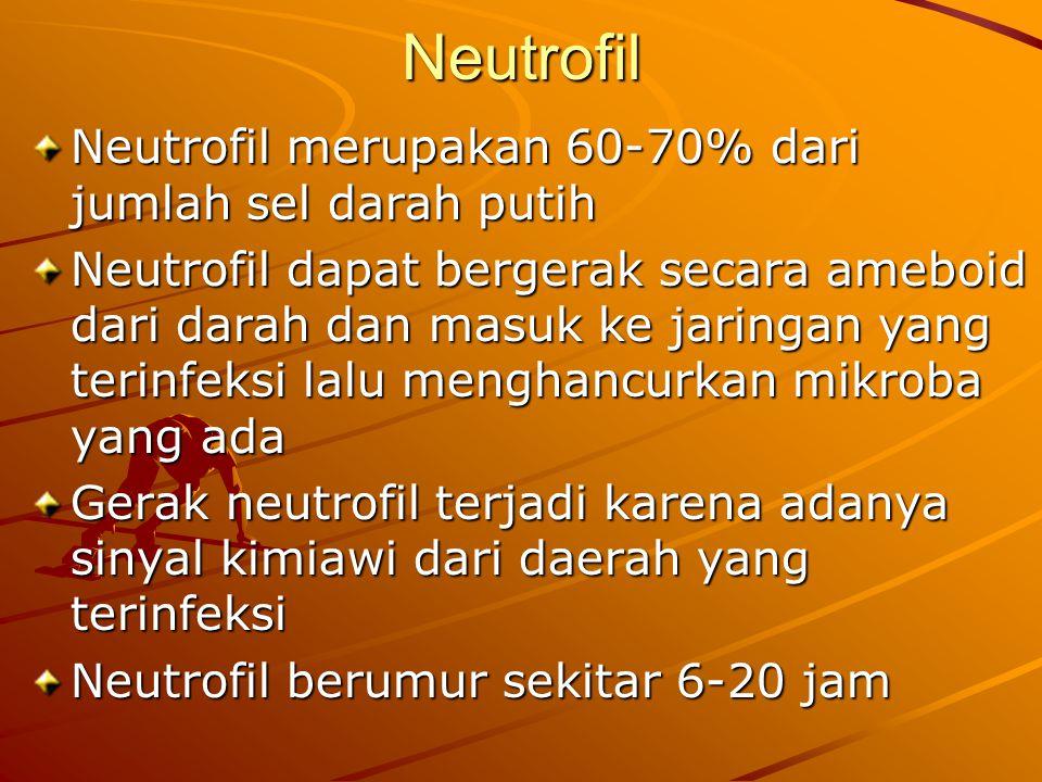Neutrofil Neutrofil merupakan 60-70% dari jumlah sel darah putih