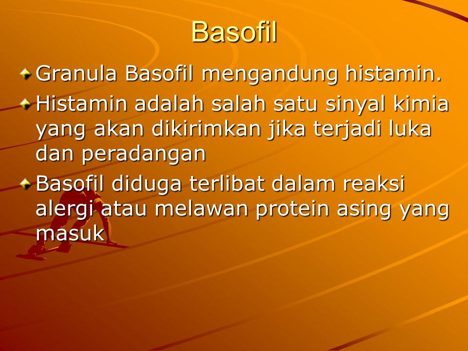 Basofil Granula Basofil mengandung histamin.